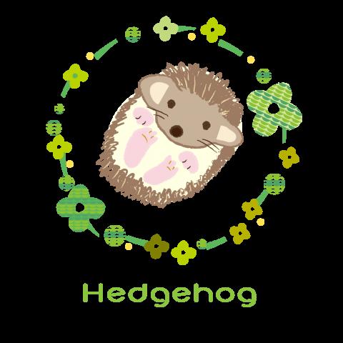 北欧ハリネズミ 赤ちゃん